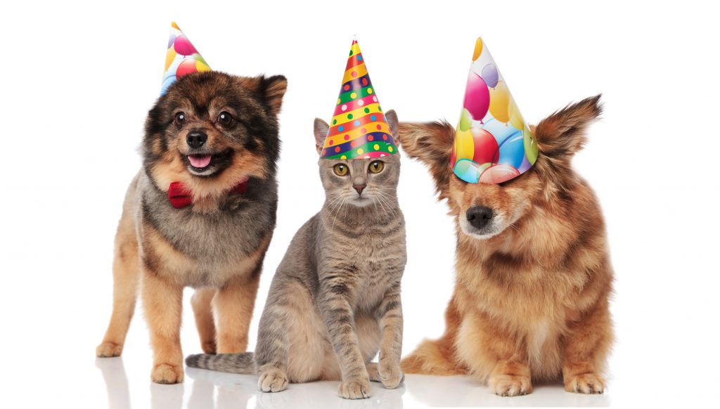 three pets, two dogs and a cat, wearing party hats, against a white backdrop