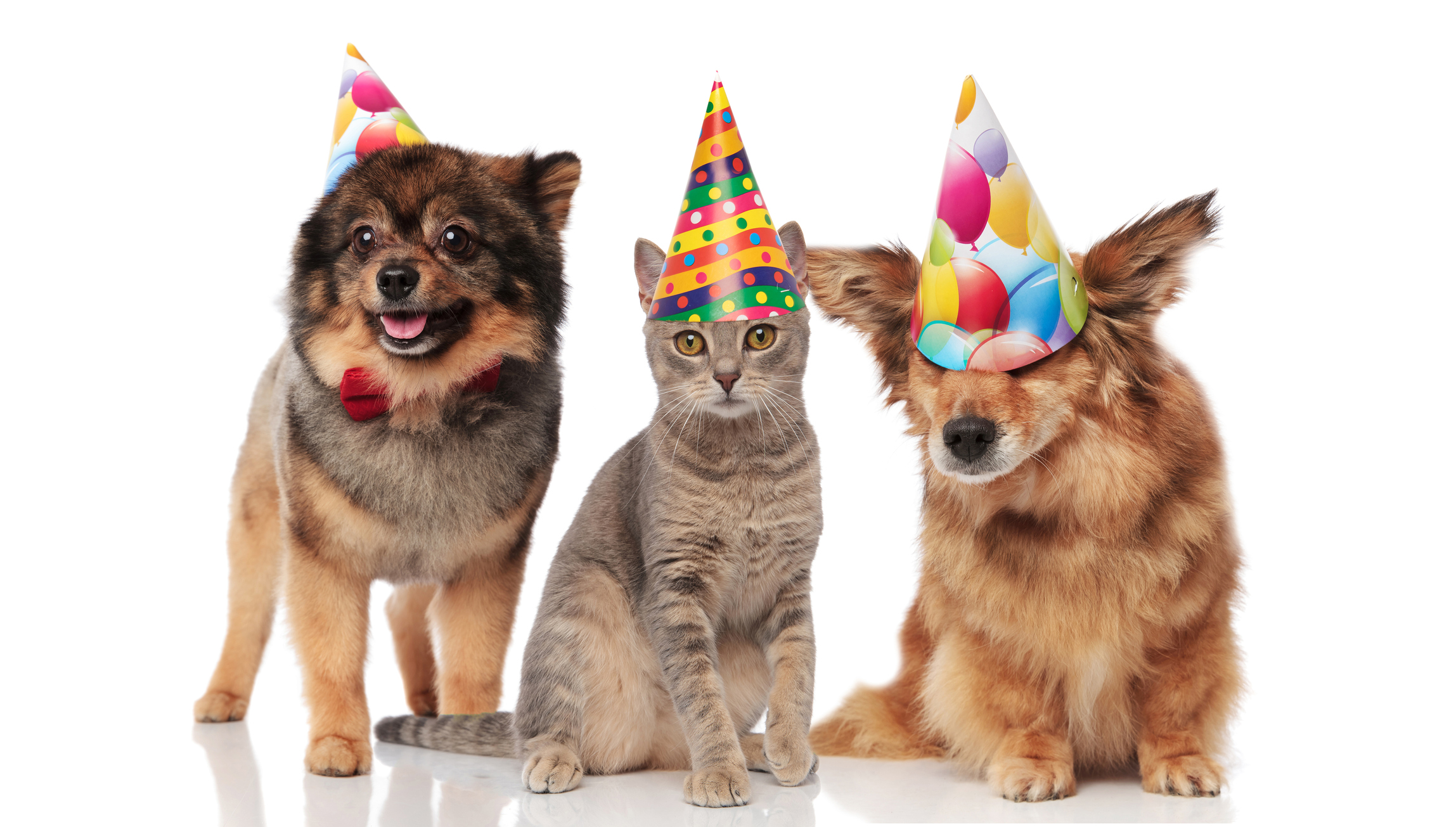 Ways To Celebrate Your Pet