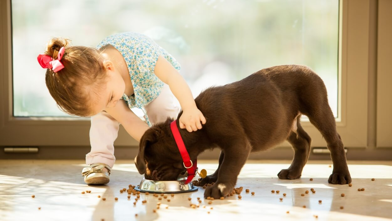 "A toddler ""helping"" a brown puppy eat, kibble scattered on the floor"
