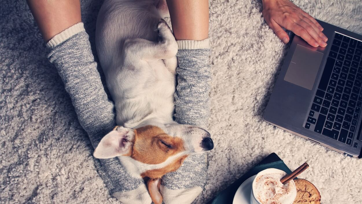 Close-up of a small brown and white dog sleeping between his person's sock-clad feet; there's a laptop and a mug of hot chocolate beside them