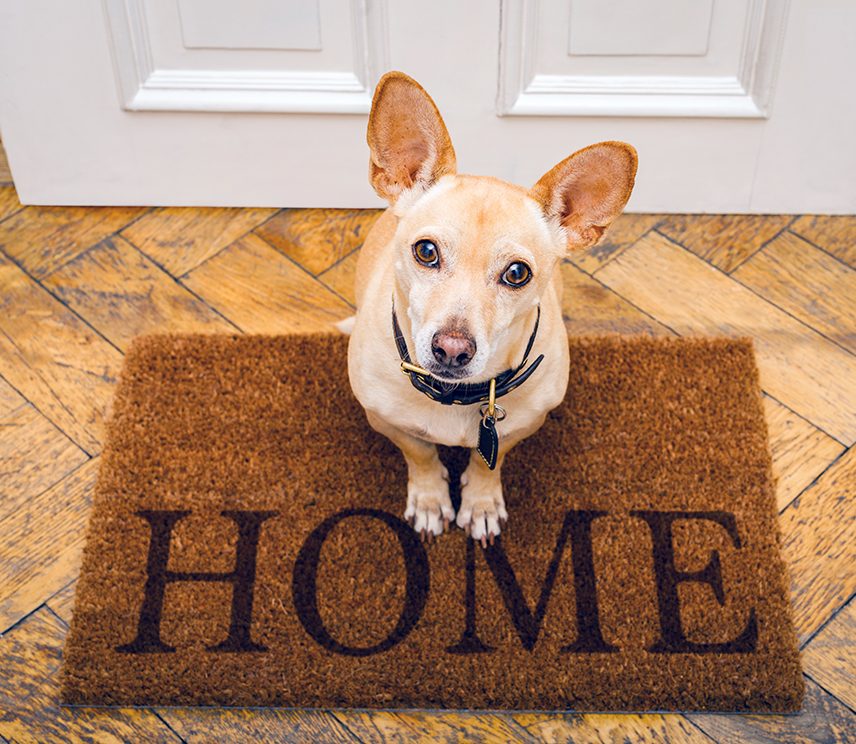 dog at front door on welcome mat