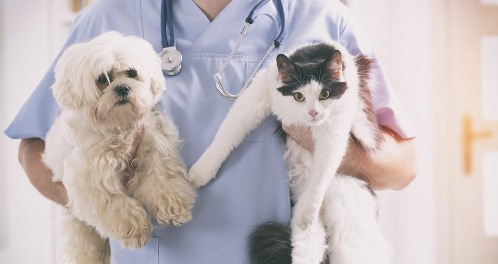 veterinarian holding a small fluffy white dog in one hand and a black and white cat in the other hand