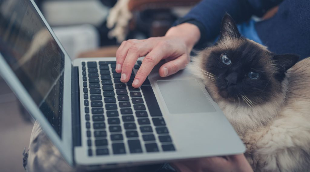closeup of person using a laptop, sitting on a couch with a cat in their lap