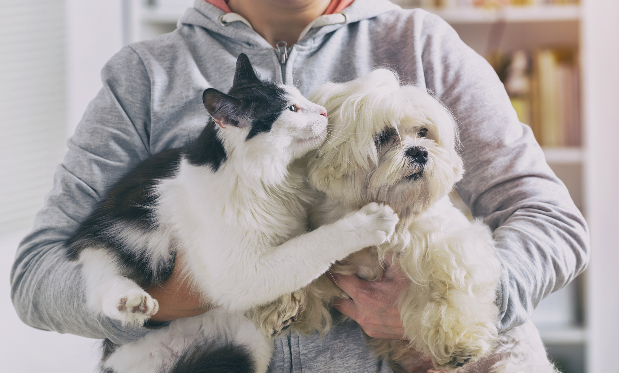 pet owner holding cat and dog