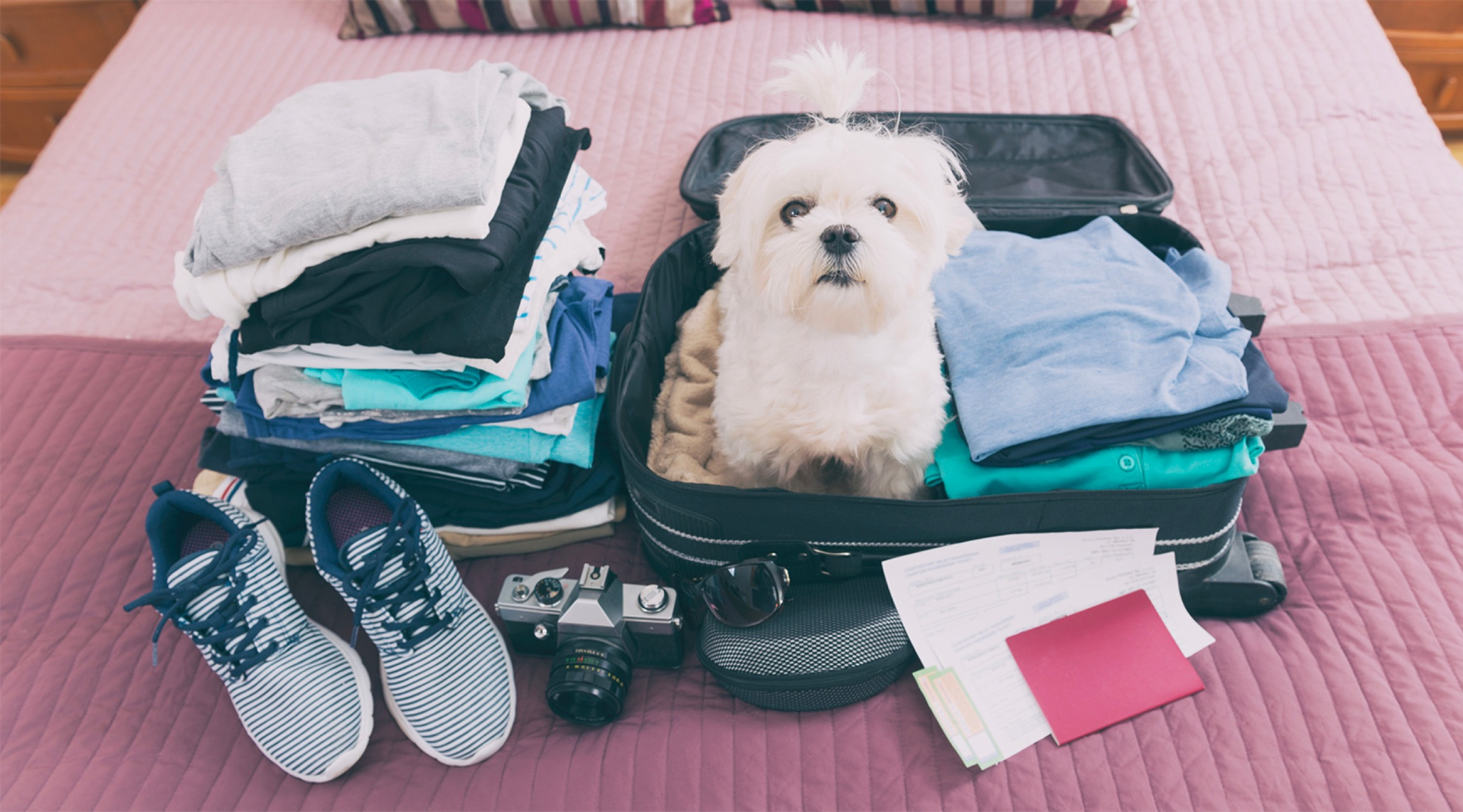 Small white dog sits in an open suitcase on a bed, with clothing and shoes surrounding it