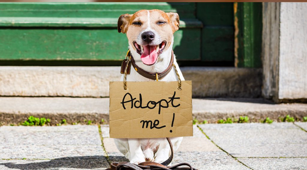 "small terrier dog sitting on sidewalk with cardboard ""adopt me"" sign around neck"