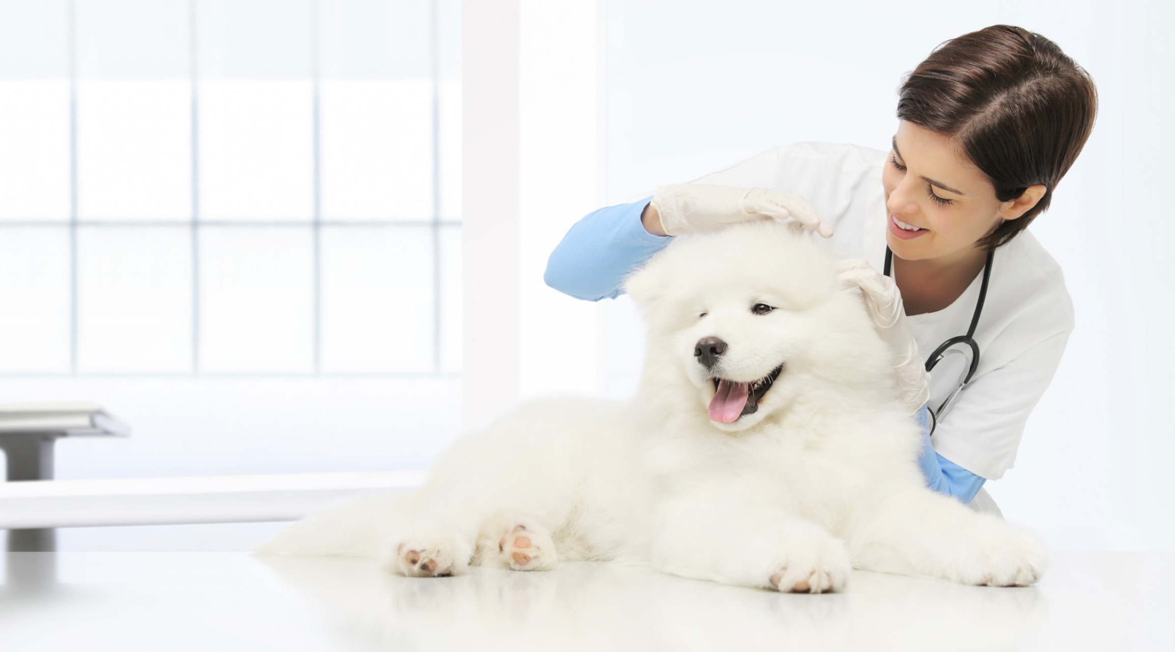 fluffy white dog on exam table being examined by smiling female veterinarian