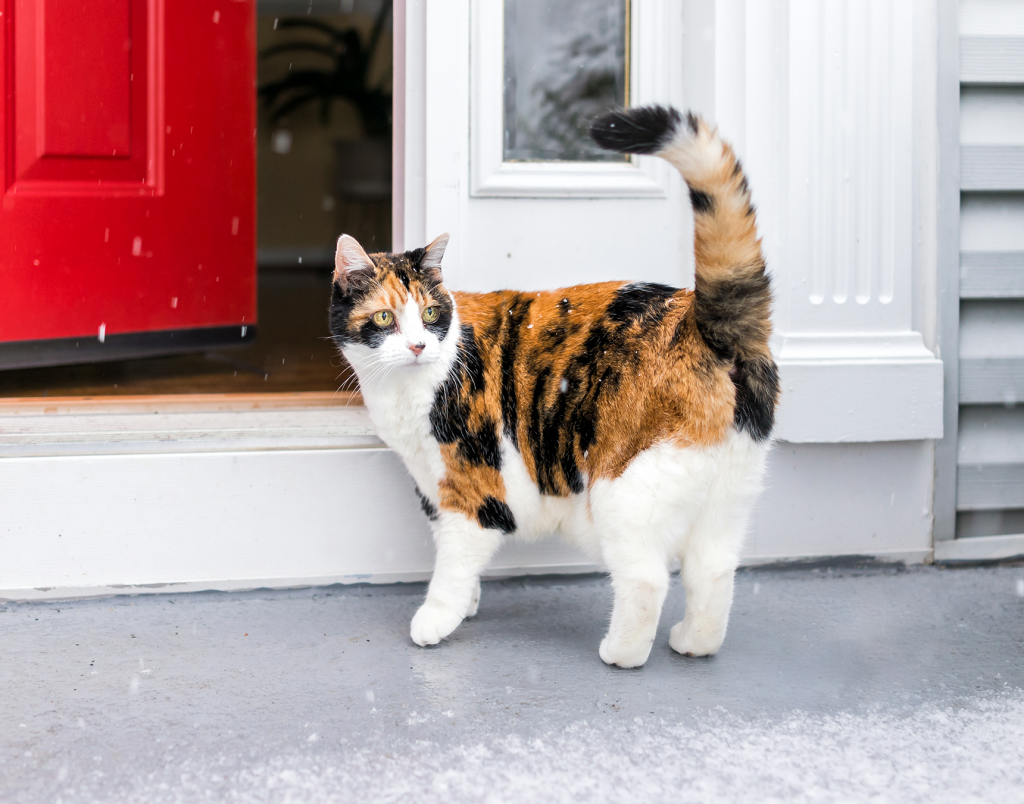cat outside snowy front door