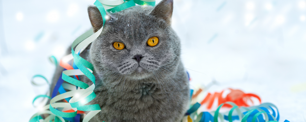 dark gray cat with colorful streamers