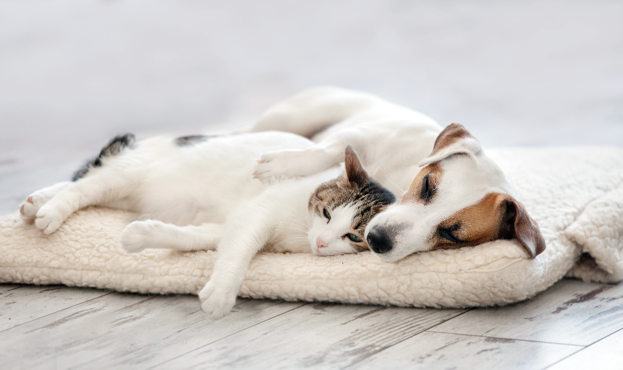cat and dog sleeping cuddled up together on a fleece cushion on the floor