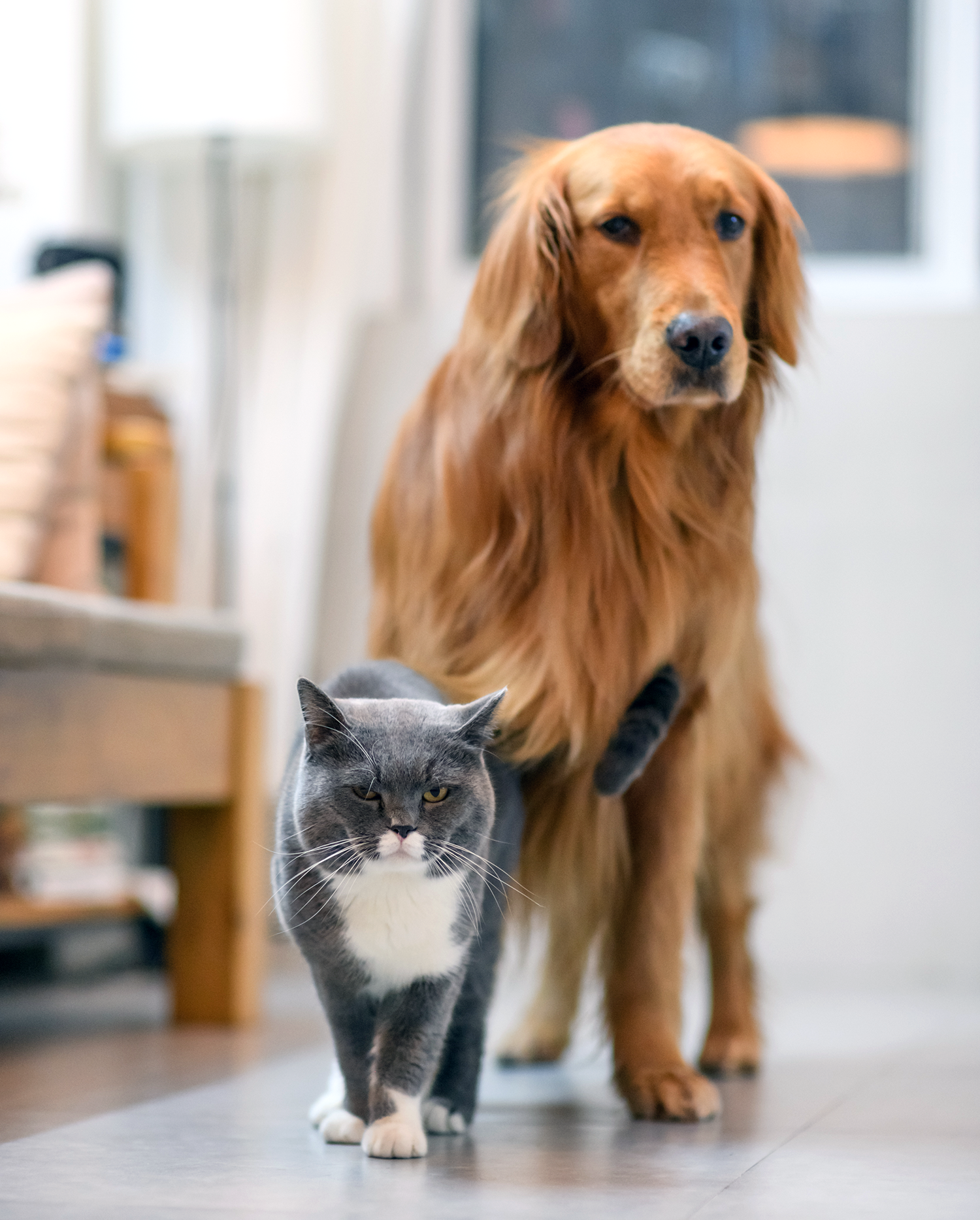 15 Things You Didn T Know About Cats And Dogs Vetsource
