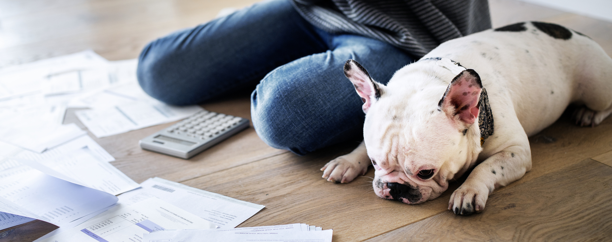 person sitting on the floor with a bulldog beside her, with financial statements and calculator spread out in front of her