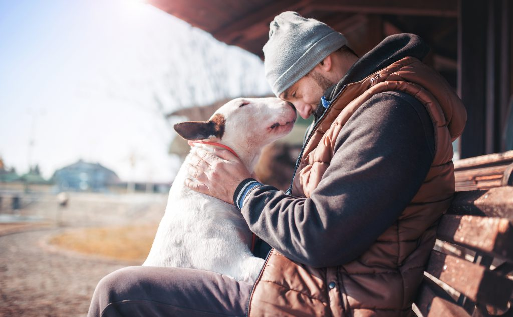 Man sitting on a bench with a bull terrier on its hind legs, getting affection