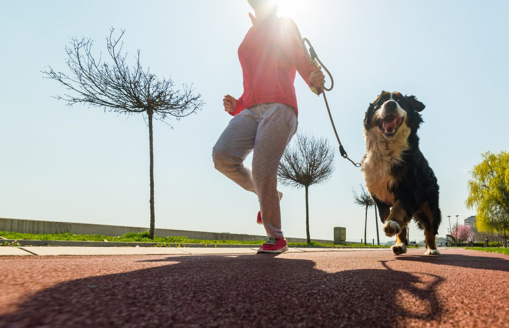 Woman running outside with Bernese Mountain dog