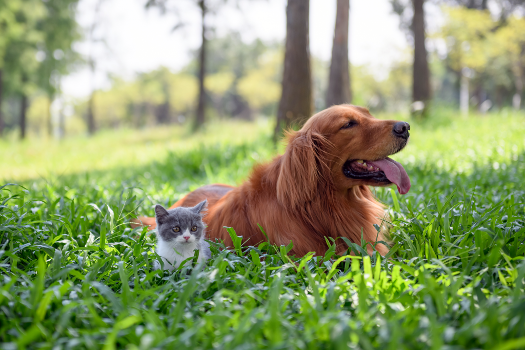 dog and cat sitting outside in the grass