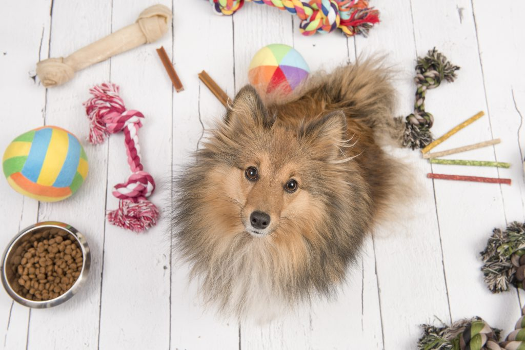 collie-type dog sitting on the floor surrounded by toys, chews, balls, and a bowl of dog food