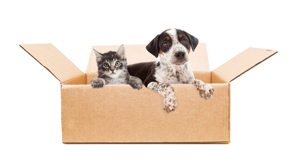 cat and dog sitting in cardboard box, for home delivery