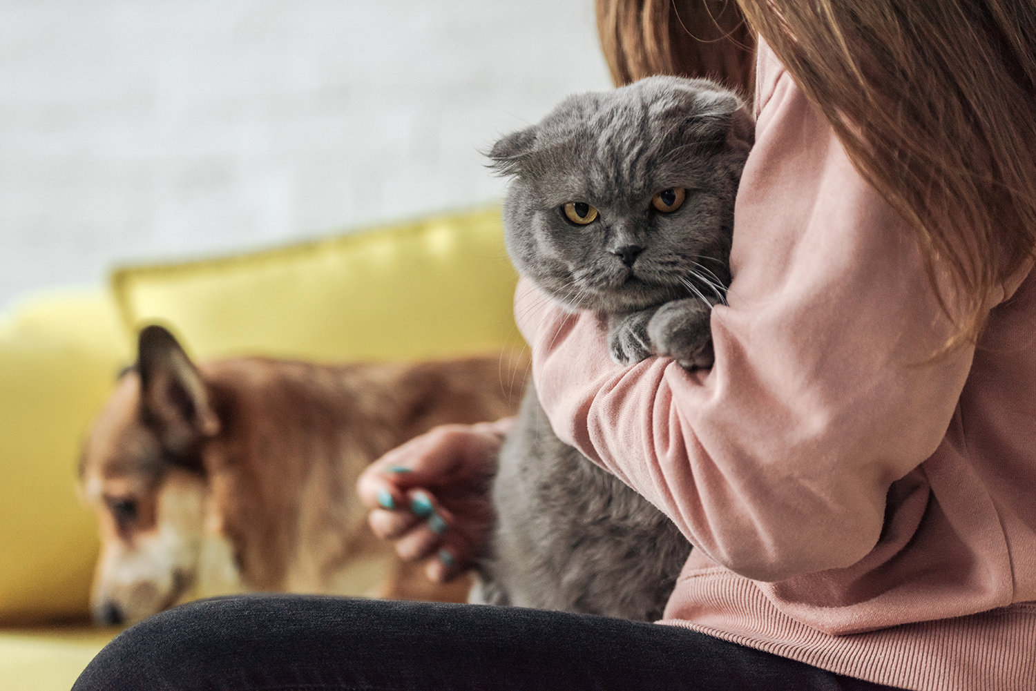 woman on couch with dog and cat