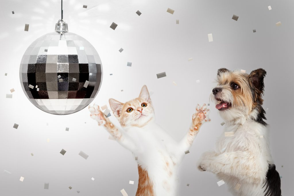 dog and cat with a disco ball