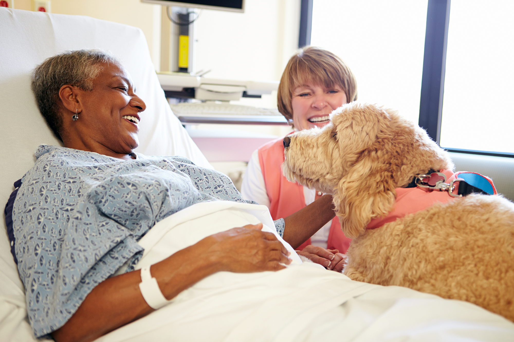 hospital patient with therapy dog