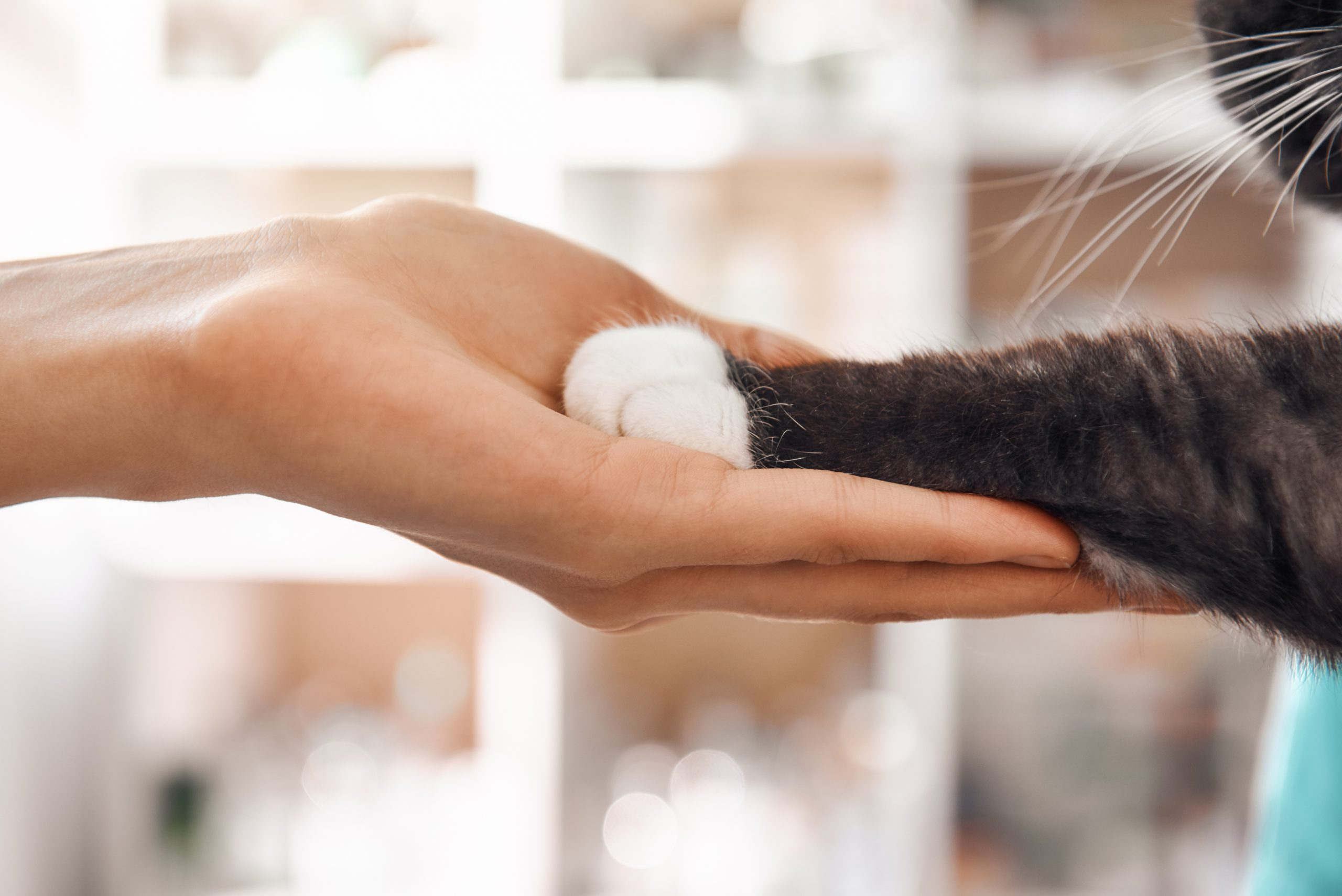 Close-up photo of a female vet's hand holding a black cat's paw