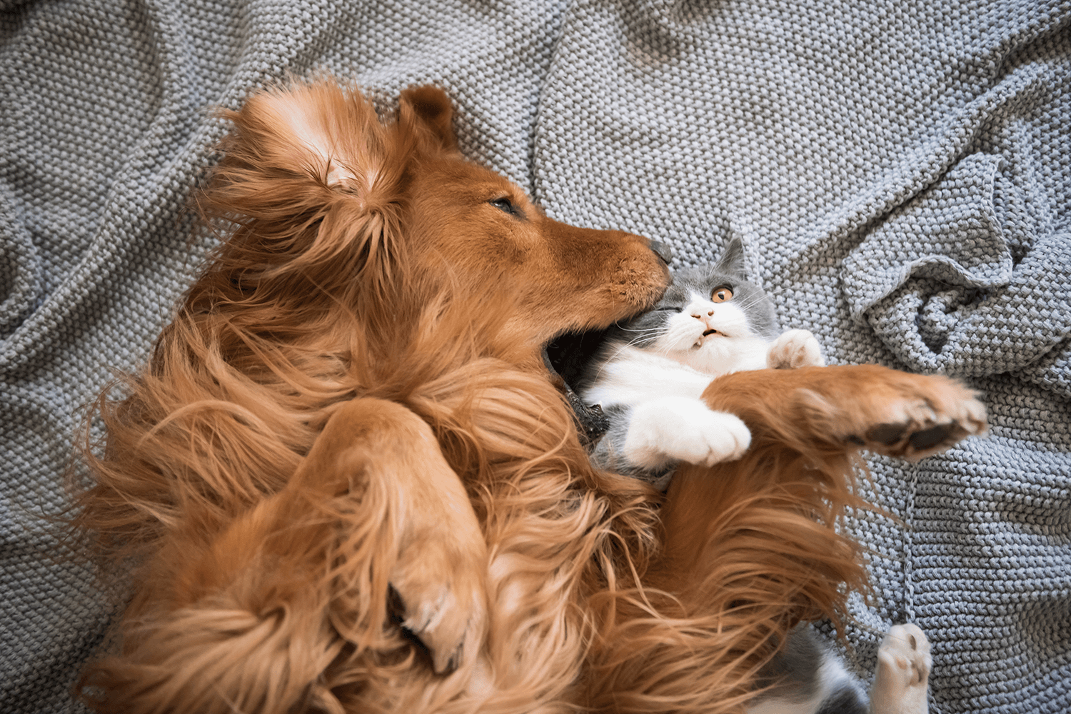 dog and cat playing on a blanket