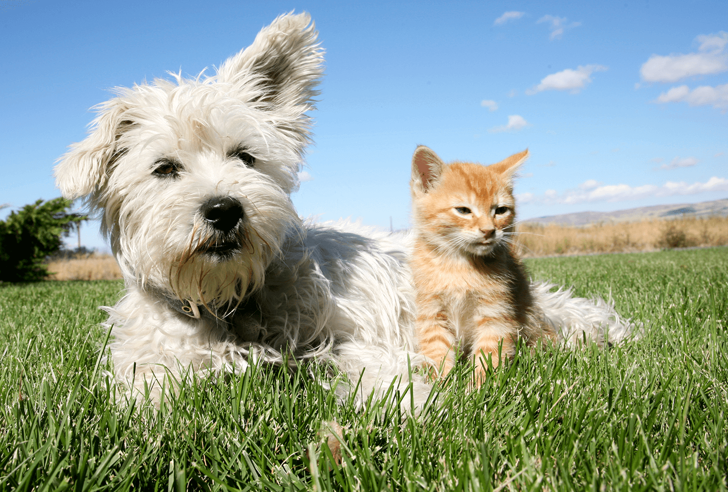 dog and cat sitting in the grass