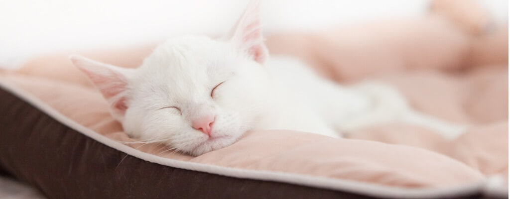 close-up of white cat sleeping cozily in a pale pink and brown pet bed