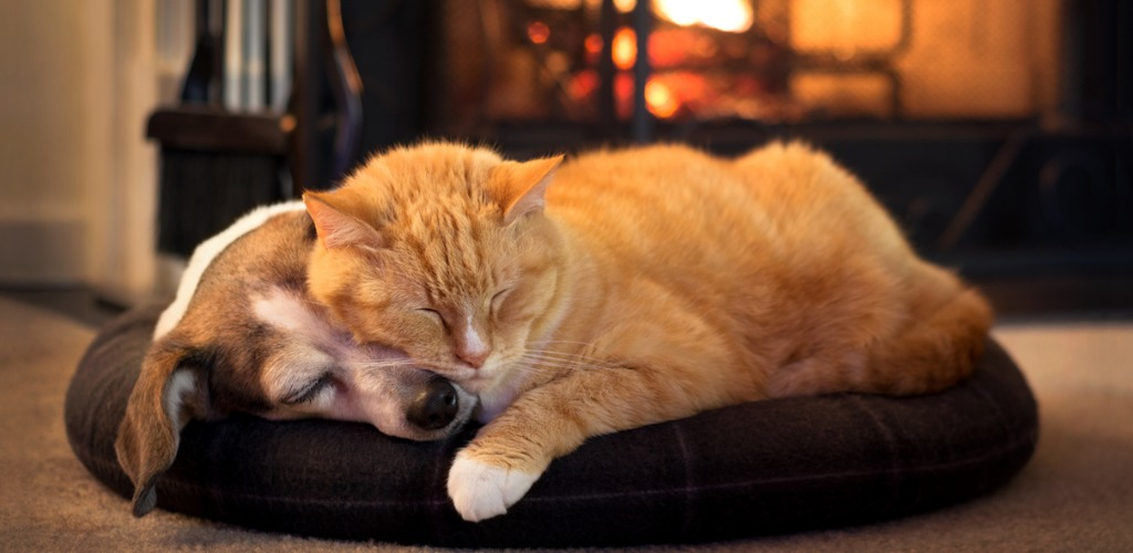 cat and dog snoozing cozily in front of a fireplace