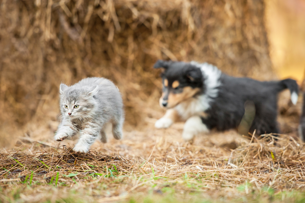 cat and dog running outside