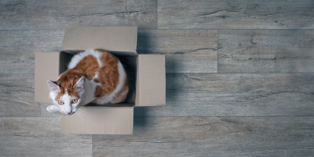 orange and white cat sitting in a cardboard box on a hardwood floor