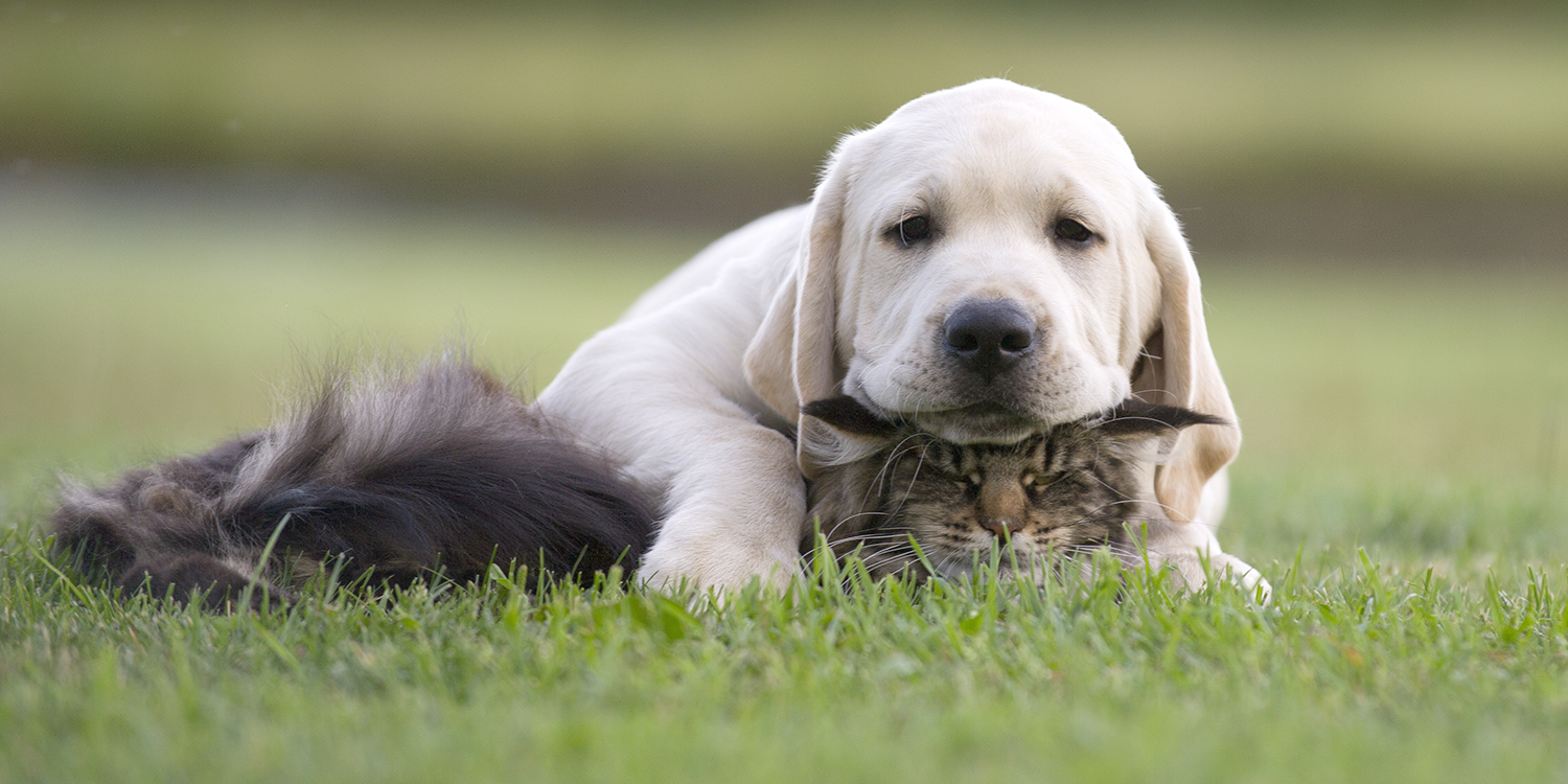 dog resting his head on a cat, they're laying in the grass outside